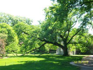 Curvacious Cork Tree