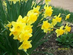 As bright as spring sunshine.